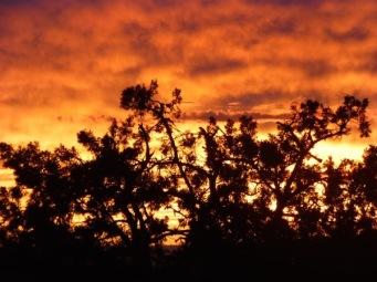 Juniper Fiery Sky