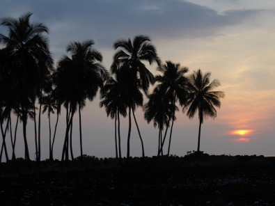 Hawaii Palm Sunset