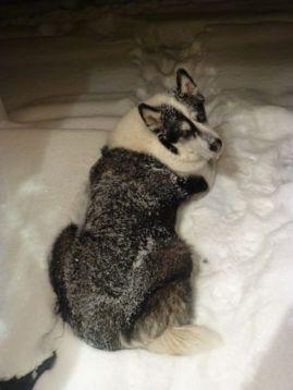 Oreo Snow Queen