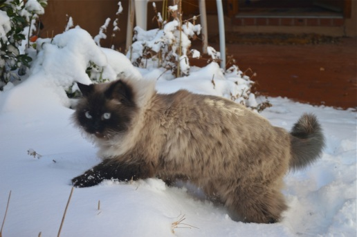 Yeshe snowplay