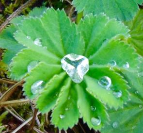 Heart Dewdrop2