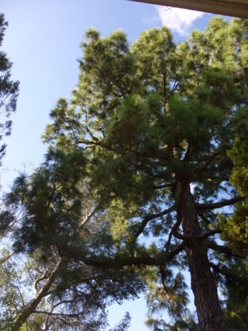 Denker trees